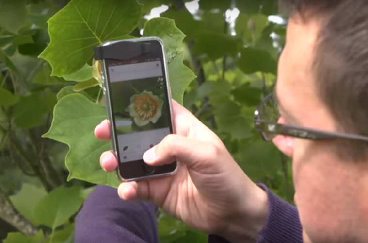 use-your-phone-to-identify-a-plant